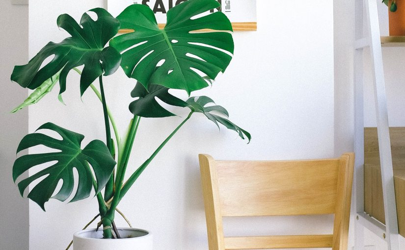 Green Home Decor – 6 Best Types Of Live Flowers + Indoor Plants For ApartmentLiving