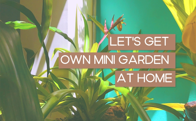 Home Decor – Ways And Steps To Get Your Own Cool Mini Garden AtHome